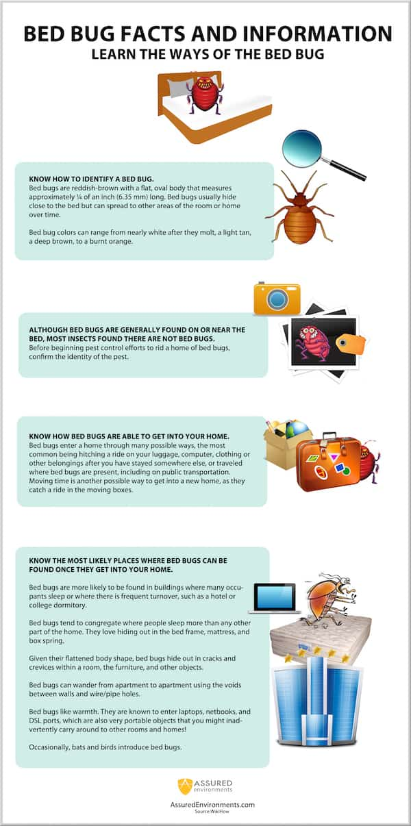 Bed Bug Facts and Information - Infographic
