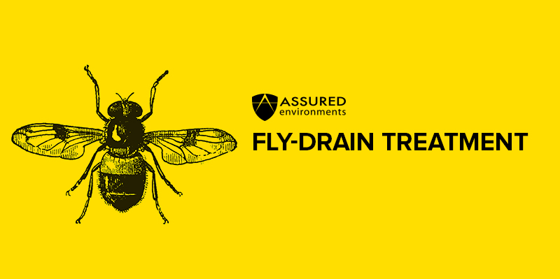 Fly Drain Treatment